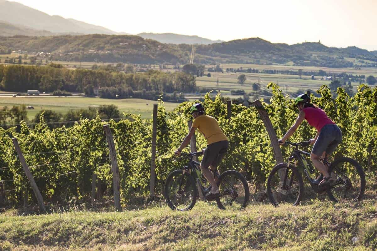 Cycling in the vineyards with RockVelo rental e-bikes.