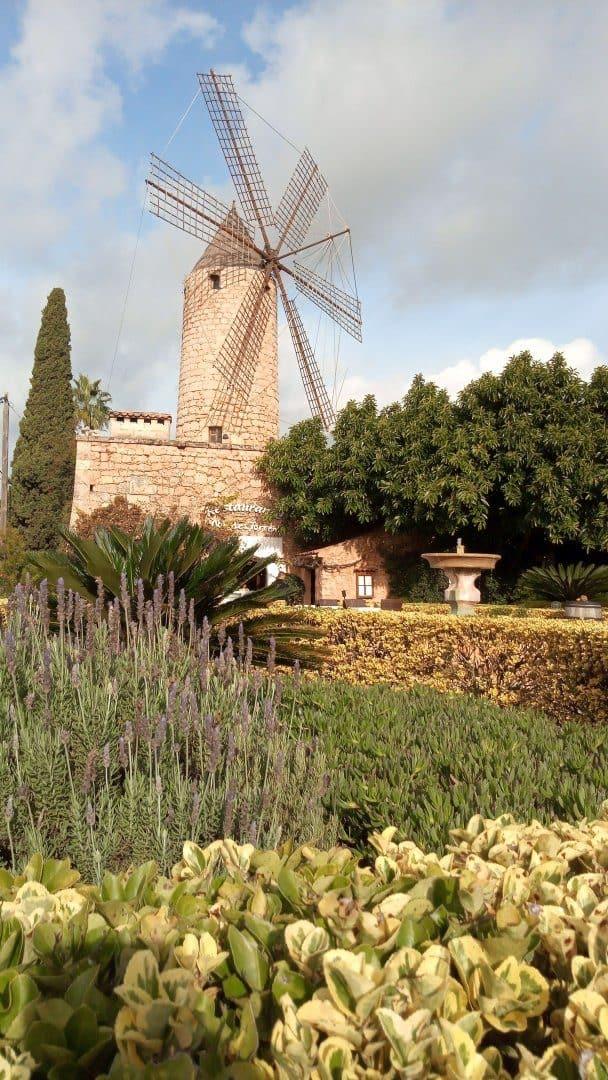 mlin na veter, v ospredju botanični vrt
