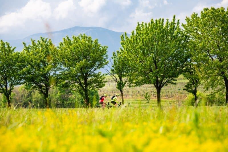 Cvetoča polja v Vipavski dolini in kolesarja.