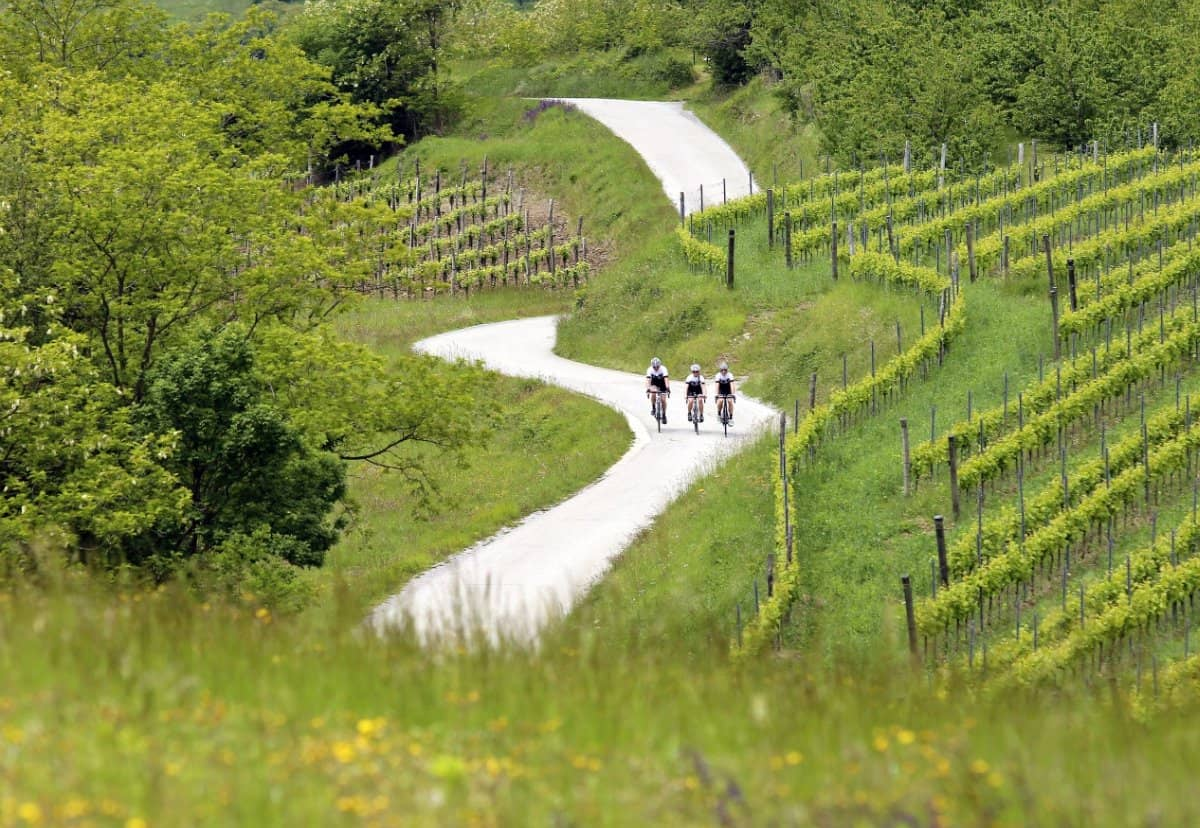 Road cycling Slovenia vineyards of Vipava valley foto by rockvelo
